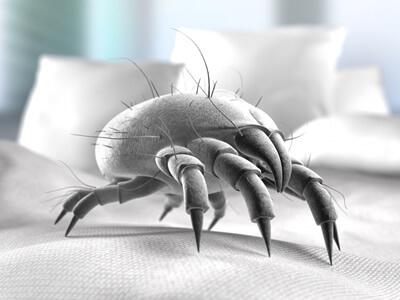 beschwerdefrei trotz hausstaub allergie durch milben heilstrategie. Black Bedroom Furniture Sets. Home Design Ideas